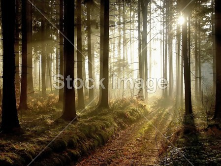 Forest path at sunset